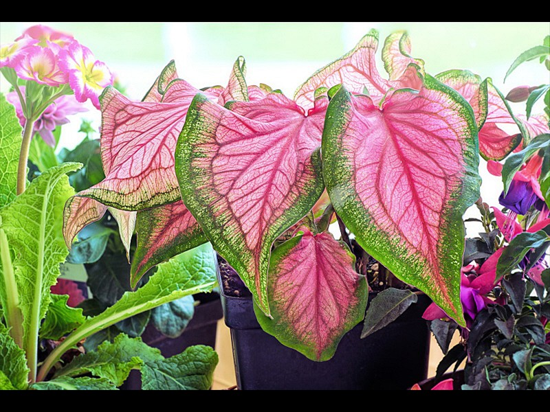 plant-3381317_1920